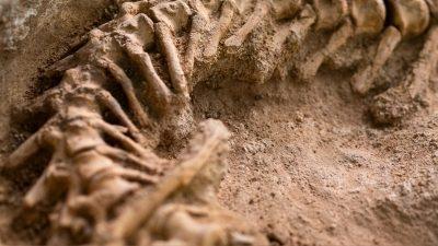INFINITI QX Series find new dinosaur species in Gobi Desert